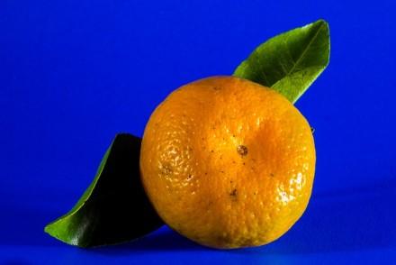 בלוגים תפוז